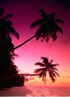 Silhouette of Palm Trees at Sunset Fihalhohi Island