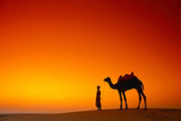 Silhouette of Man with Camel Rajasthan