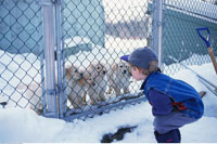 Boy Looking at Puppies Outdoors In Winter