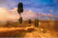 Cypress Trees Near Pienza