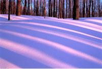 Trees and Snow Mont-Saint-Bruno Provincial Park Quebec