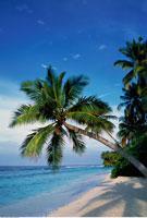 Palm Trees on Tropical Beach Maldive Islands