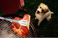 Dog Looking Up at Steak on Barbecue