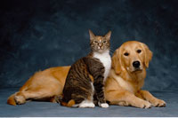 Portrait of Cat and Dog