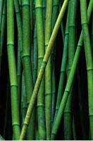 Bamboo Forest Near Hana