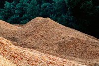 Wood Chips for Pulp and Paper Manufacturing