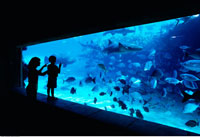 Mother and Child Looking at Fish In Aquarium