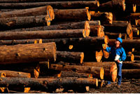 Worker with Cut and Stacked Logs