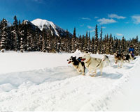 Dog Sledding Banff National Park Alberta