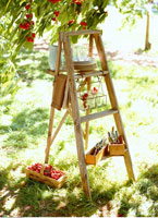 Ladder and Cherries
