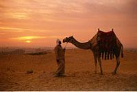 Man With Camel Giza
