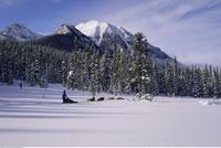 Dog Sled Team Banff National Park Alberta
