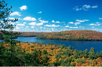 Overview of Forest and Lake Rock Lake Algonquin Provincial P