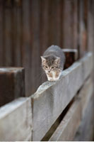 Kitten Walking on Fence
