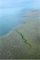 Aerial View of Mangrove Swamp