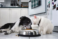 Dog and Cat Eating Together