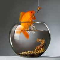 Goldfish Jumping Out of Fishbowl