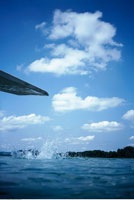 Diving Board and Splash in Lake