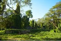 Mangrove Forest
