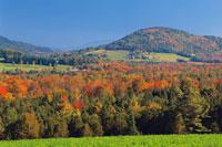 Autumn Scenic Near Peacham