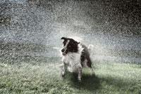 Dog Shaking Water Off