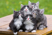 Kittens Looking Up