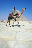 Camel Driver at Giza Pyramids