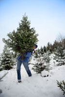 Woman Carrying Christmas Tree