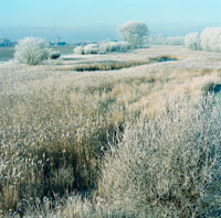 Frost on Landscape,Hoedekenskerke, Holland