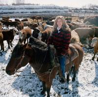 Woman on Horseback with Cattle,Edmonton, Alberta
