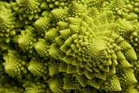Close-up of Roman Cauliflower