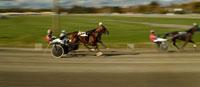Horses Pulling Sulkies in HarnessRace