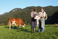Farmer and Veterinarian with Cow