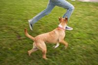 Dog Running in Yard