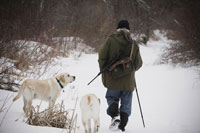 Hunter Walking with Dogs