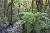 Stream in Rain Forest, MilfordSound, New Zealand
