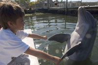 Boy with Dolphin、 MarathonDolphin Sanctuary