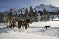 People with sled horses in snow 20025271946| 写真素材・ストックフォト・画像・イラスト素材|アマナイメージズ