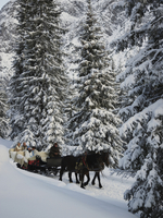 Horses pulling sleigh in snow