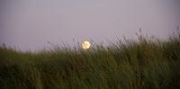 Grass at the beach of Sylt at moonlight, North Sea, North Frisian Island, Germany