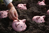 Piggy Banks Planted in Dirt