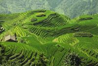 Long Ji Rice Terraces, Ping An Village