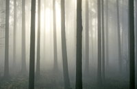 trees in the autumn mist, near Bodman, Lake Constance, South Germany