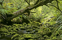 Mossy creek near Doughboy Bay, Stewart Island, New Zealand