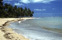 Beach in Praia Do Forte, Bahia, Brazil