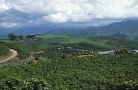 Coffee plantations, Costa Rica