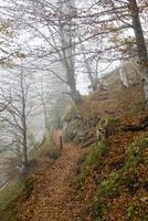 Germany, Bavaria, Allgaeu, Path to Marien bridge in fall