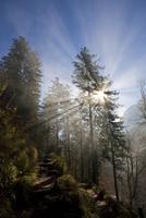 Germany, Bavaria, Allgaeu, Forest track