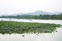 China, Hangzhou, West Lake, water lilies