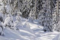 Austria, Salzburger Land, Altenmarkt-Zauchensee, Winter Landscape